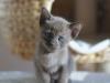 tonkijska kotka - Ifigenia - to byłaby wpadka