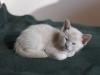 kot Ifikles jak leżę to będę miał więcej siły na zabawę