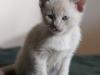 kot Ifikles nie wołajcie mnie bo i tak do was nie pójdę
