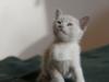 kot Ifikles - fajny jestem kot