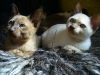 koty tonkijskie - co tam macie dobrego?