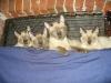 Kocięta w komplecie